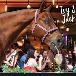 Ivy & Jack - Melbourne Cup Day Perth - Restaurant Bar